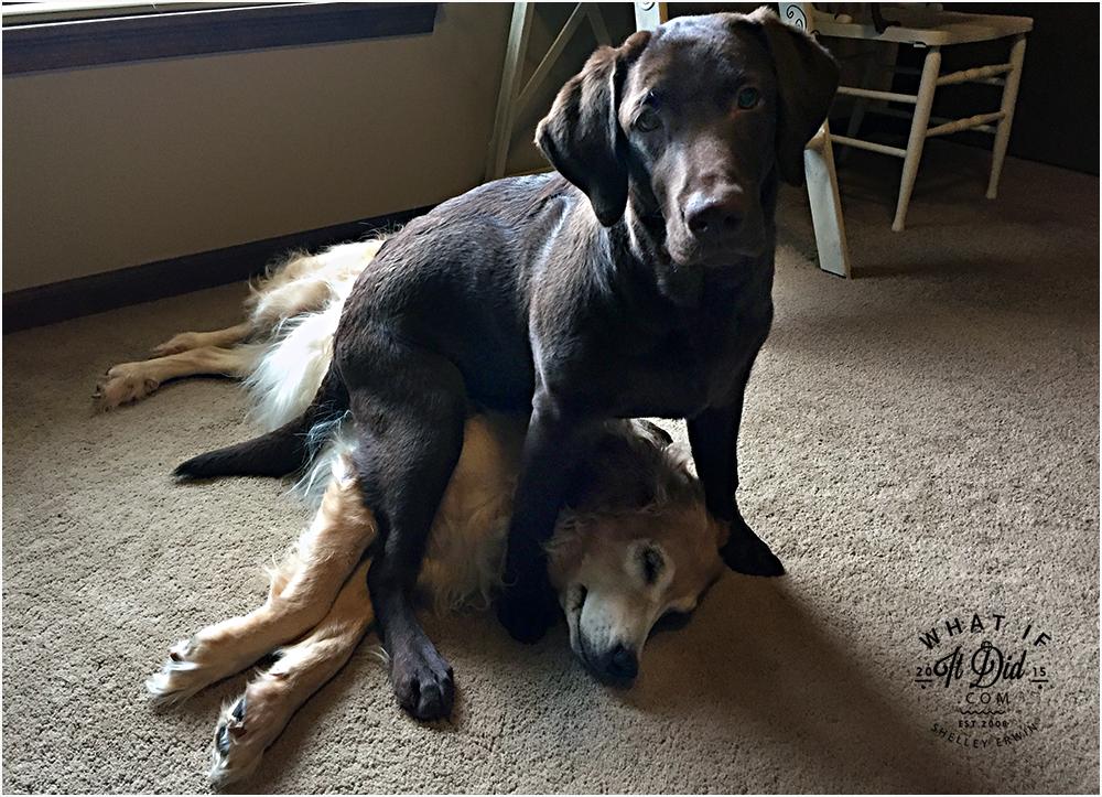 pit bulls and non-parolees