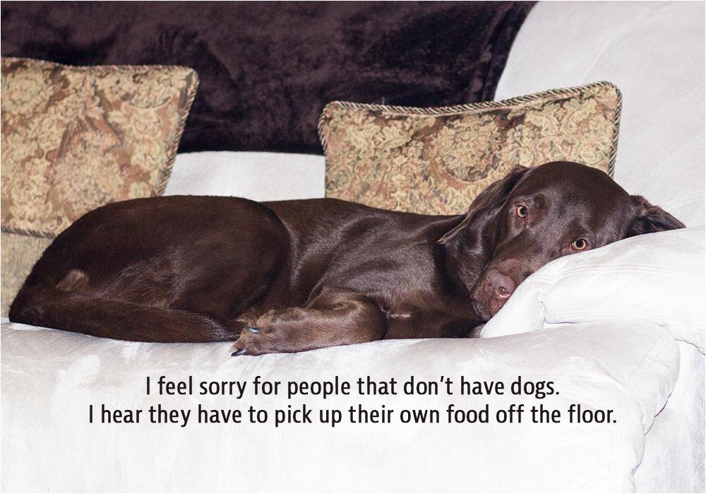 food obsessed hound dog