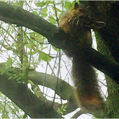 horrible photo – bad squirrel