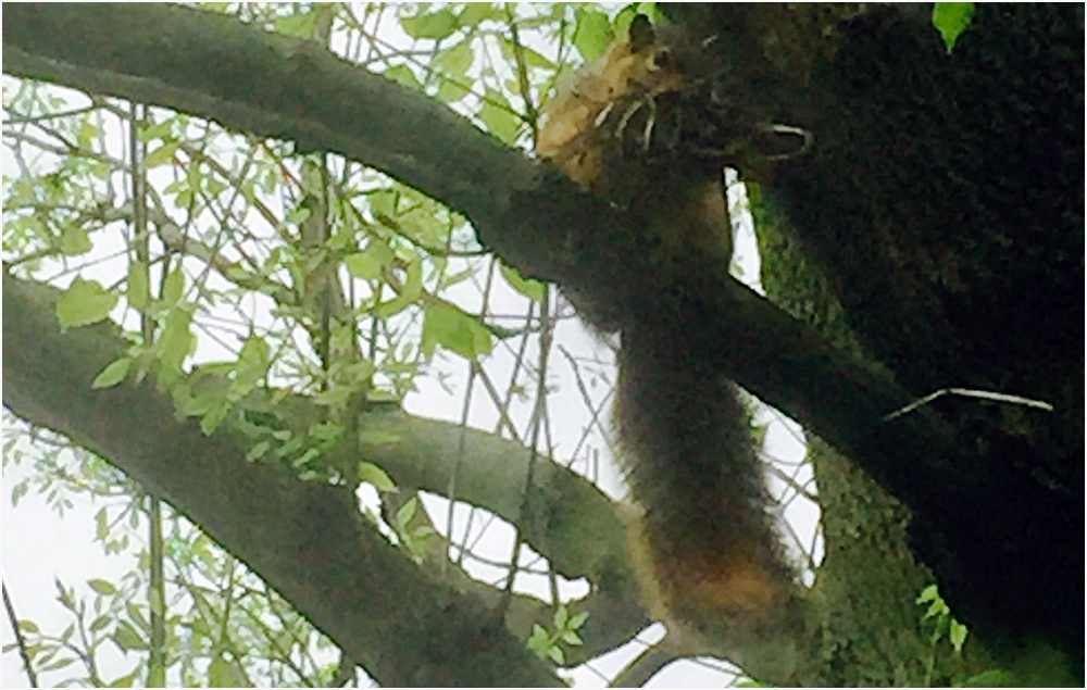 horrible photo – bad squirrel