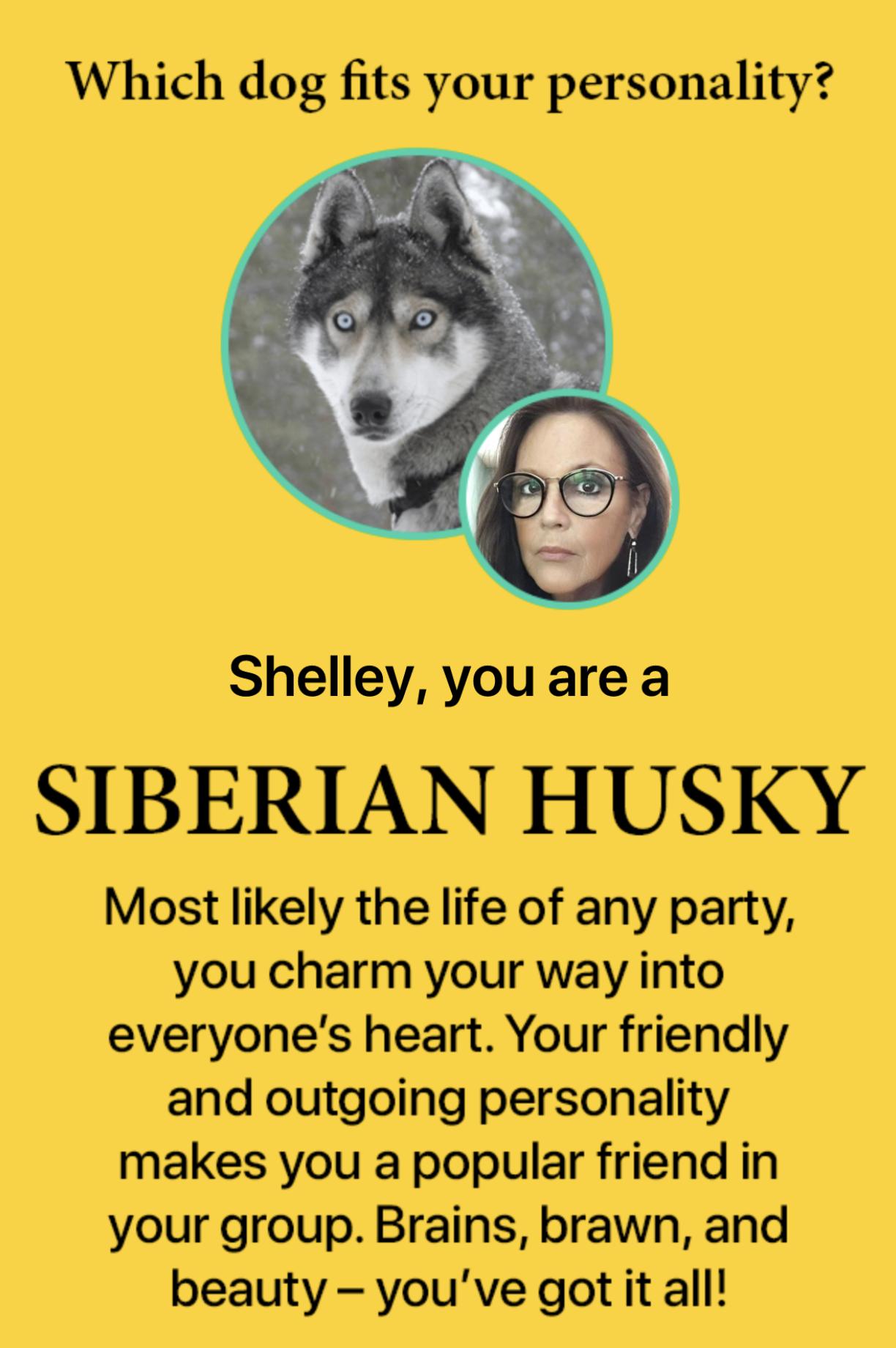 i am a Siberian husky