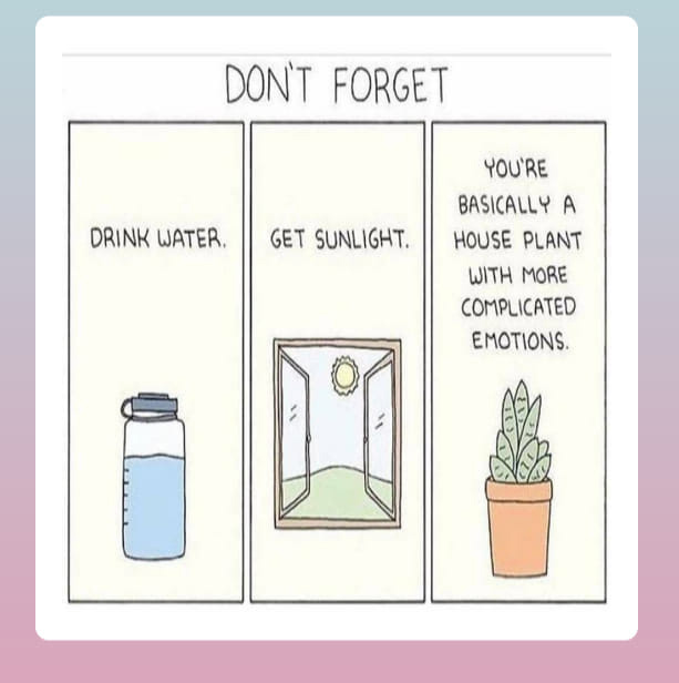 You are a houseplant