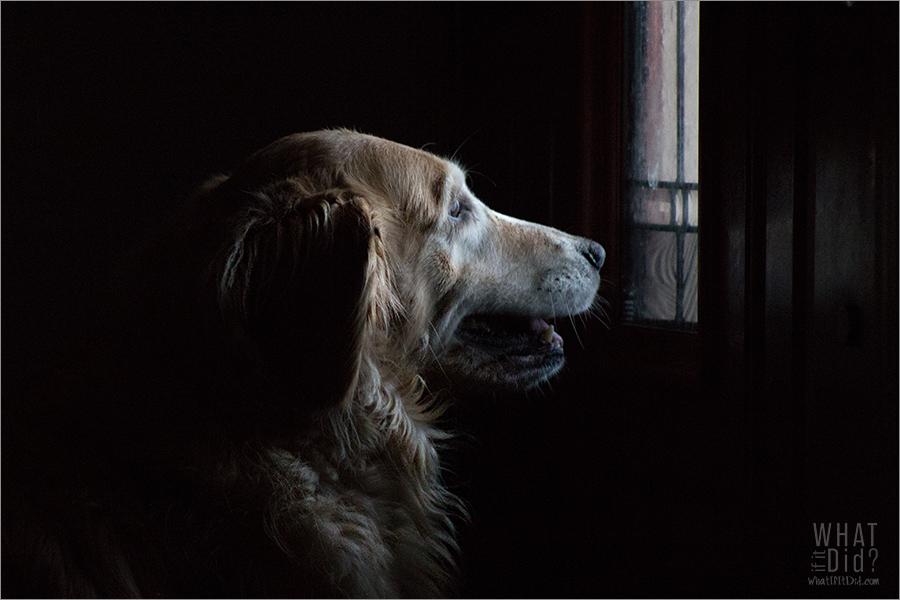 she waits...