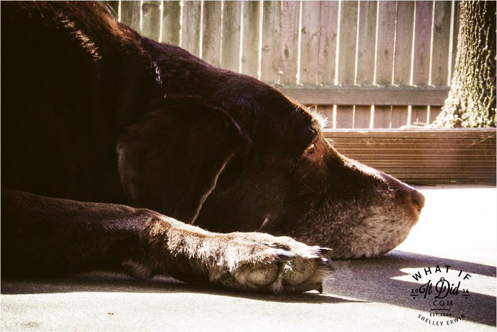 tan hound
